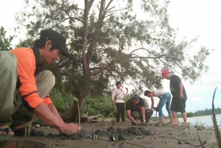 DKP Mukomuko batal tanam mangrove di pantai kritis