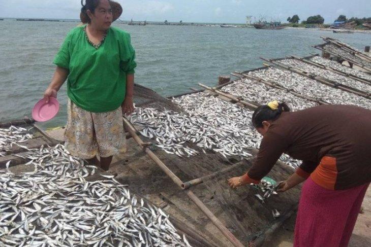 Produksi ikan asin di TPI Labuan, Pandeglang melimpah