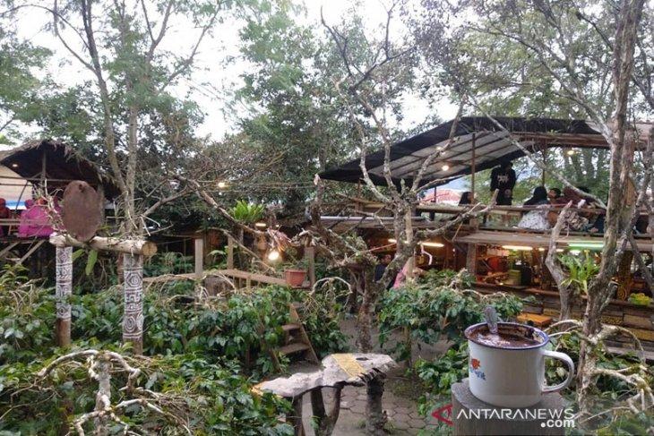 Pesona Aceh Tengah sebagai negeri surga kopi dunia
