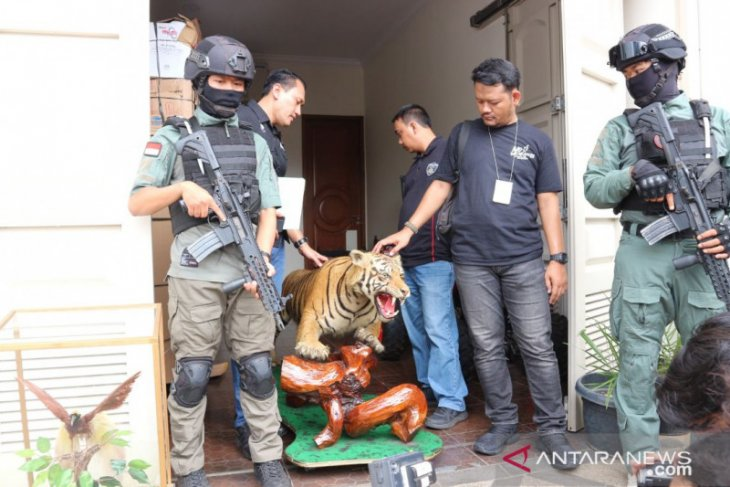 Police seizes taxidermied protected animal specimens at AM's house