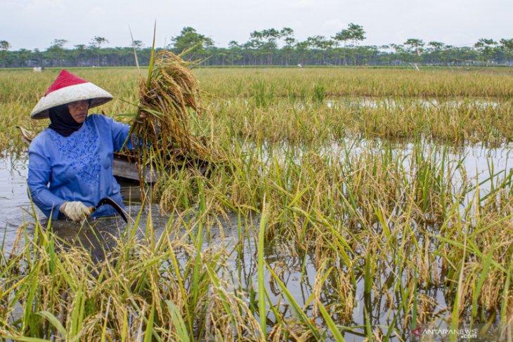 Ada ribuan hektare sawah di Karawang terendam banjir