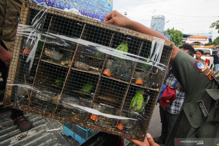 Kasus penyelundupan burung dilindungi