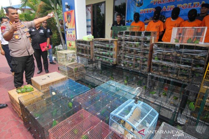 Polisi gagalkan penyelundupan ratusan burung cucak ijo