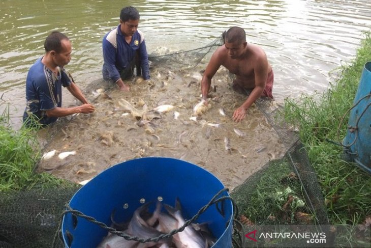 China keen to import hundreds of tons of Riau's catfish