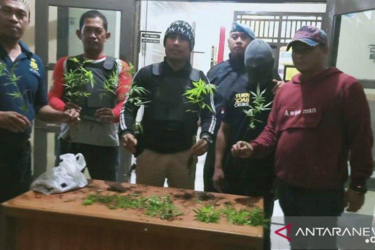 Polisi Bengkulu tangkap dua penanam ganja