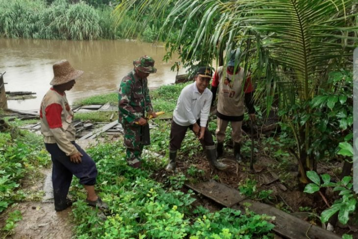 People plant bamboo seedling along Tabalong River to prevent landslide