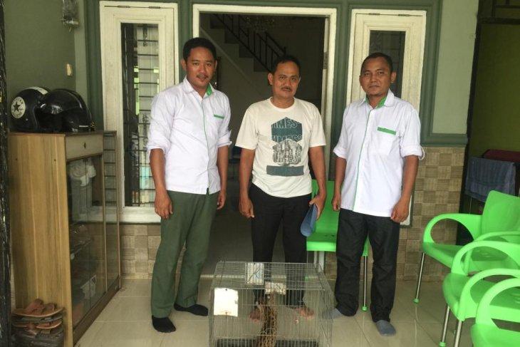 Warga Labura serahkan kucing kuwuk secara sukarela ke BBKSDA Sumut