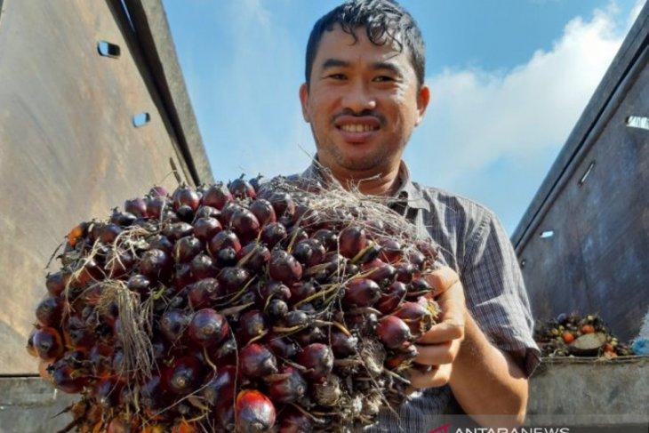 Dewan Sambas bersyukur hilirisasi CPO jadi B30 sejahterakan petani