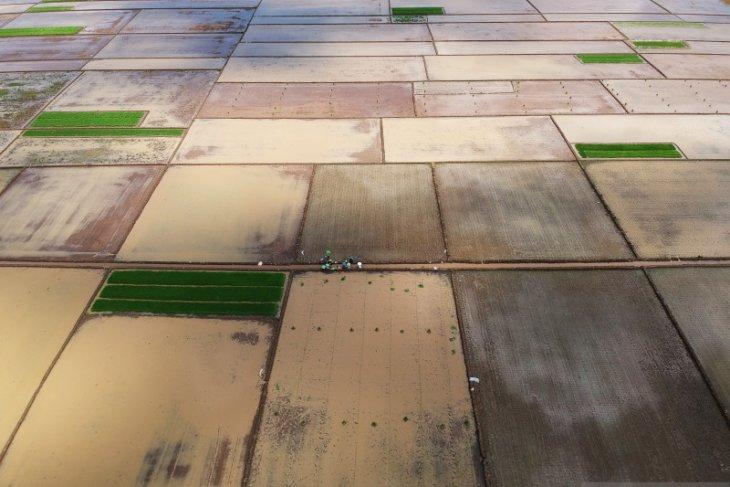 Legislator soroti rencana cetak sawah baru di lahan gambut