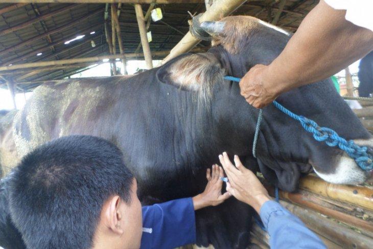 Prov Banten bebas penyakit hewan brucellosis