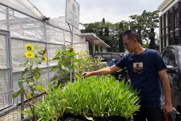 Pemprov Banten ajak masyarakat kembangkan obor pangan lestari