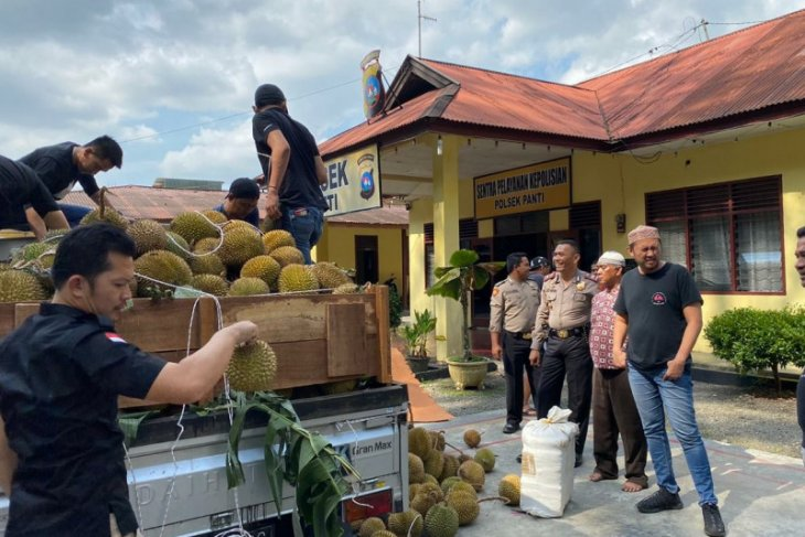 Seperempat ton ganja kering siap edar di dalam truk durian