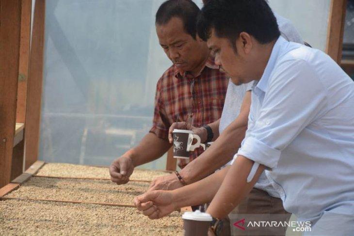 Syaakira The View and Resto mulai kembangkan kopi arabika Marancar
