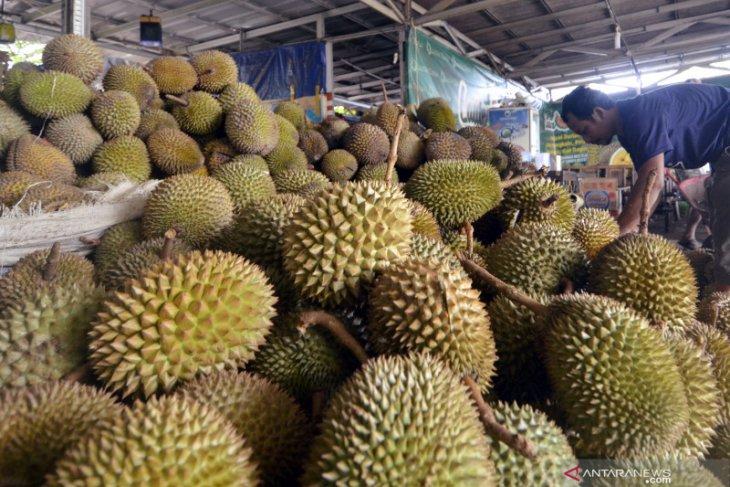 Festival durian Banten siapkan 1.000 durian gratis