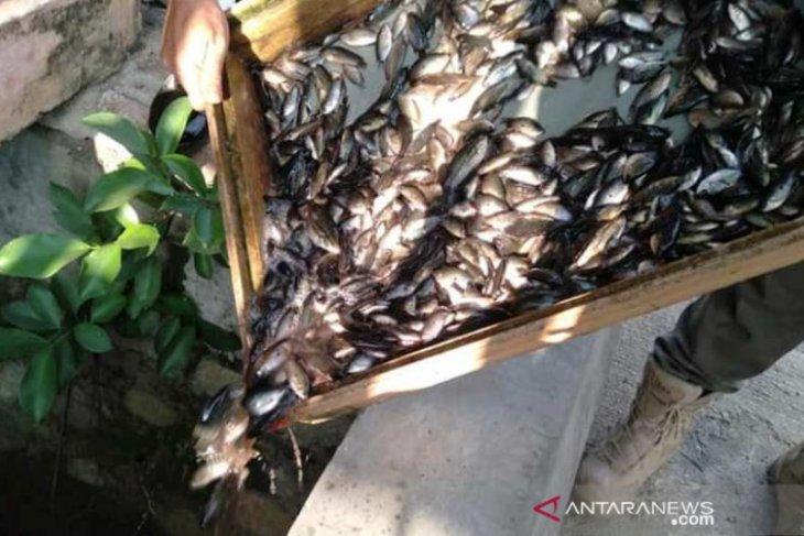 Perdagangkan anak ikan di HSS bisa dijerat pidana kurungan atau denda hingga Rp50 juta