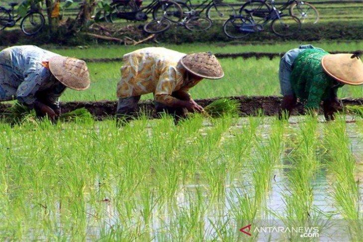 Anggoro: Petani Kaltim makin sejahtera