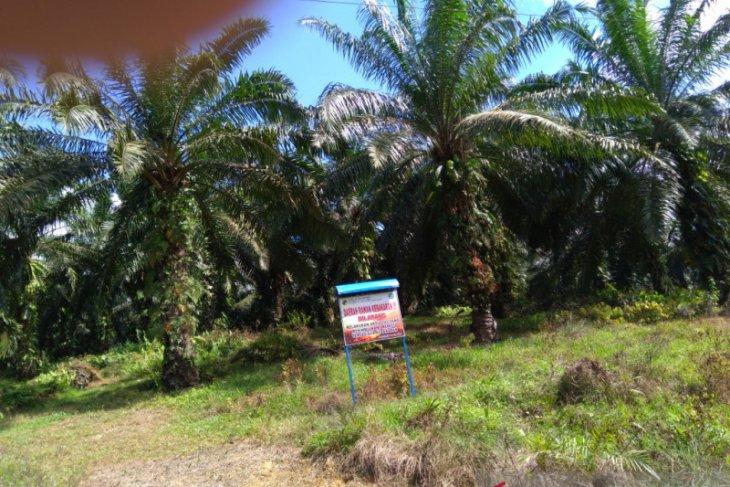 Pemkab Aceh Utara targetkan 2.500 hektare peremajaan sawit