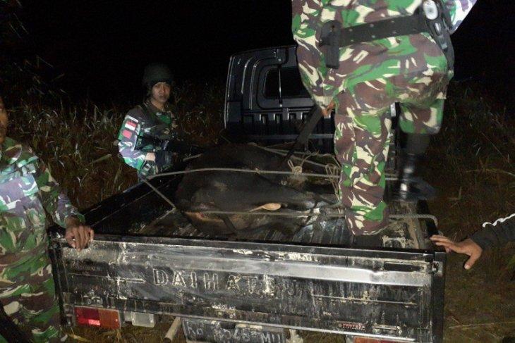 Satgas Pamtas amankan mobil kedapatan bawa sapi ilegal