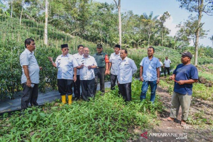 Arwin Siregar tinjau kebun bawang dan cabai guna pengendalian Inflasi daerah