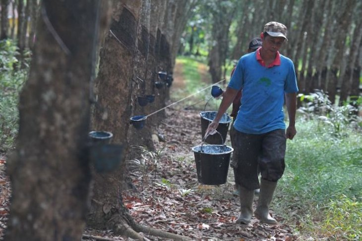 PUPR siap beli 12.500 ton karet petani sembilan provinsi termasuk Kalbar