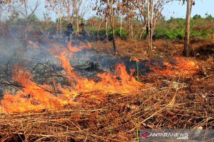 BMKG confirms detection of 24 hotspots of wildfires in Aceh