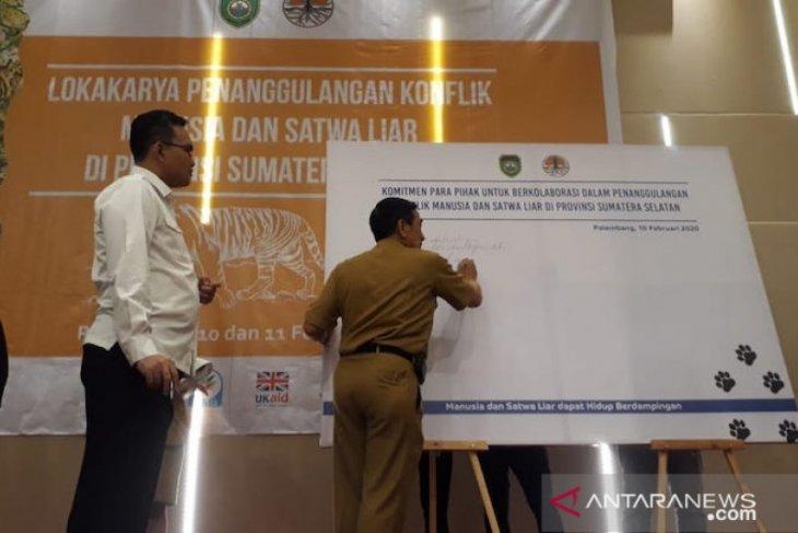 BKSDA: Populasi harimau di Sumatera Selatan 17 ekor