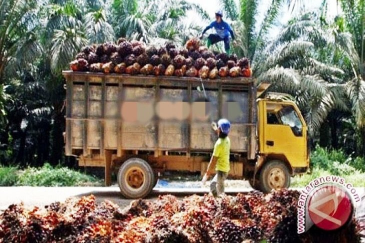 IPB records world's largest number of palm oil-based  researches
