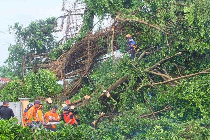 Angin kencang masih melanda sejumlah kecamatan di Jember