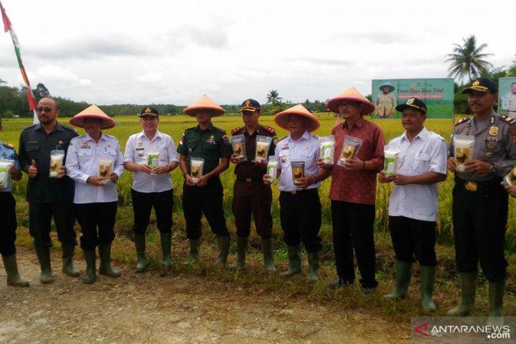 FAO-Kementan gandeng petani di perbatasan Kalbar produksi beras sehat