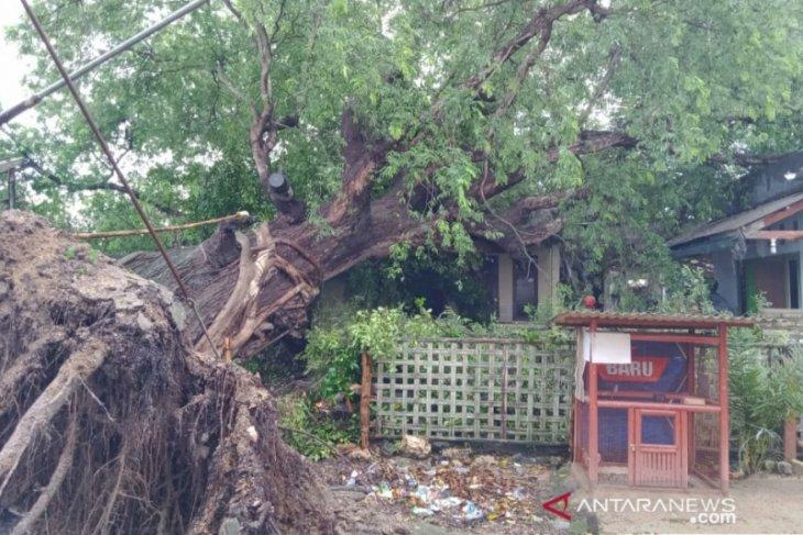 Angin kencang tumbangkan pepohonan dan putus jaringan listrik