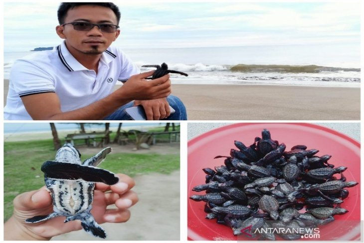 Thousands of sea turtles released into Indian Ocean, North Sumatra