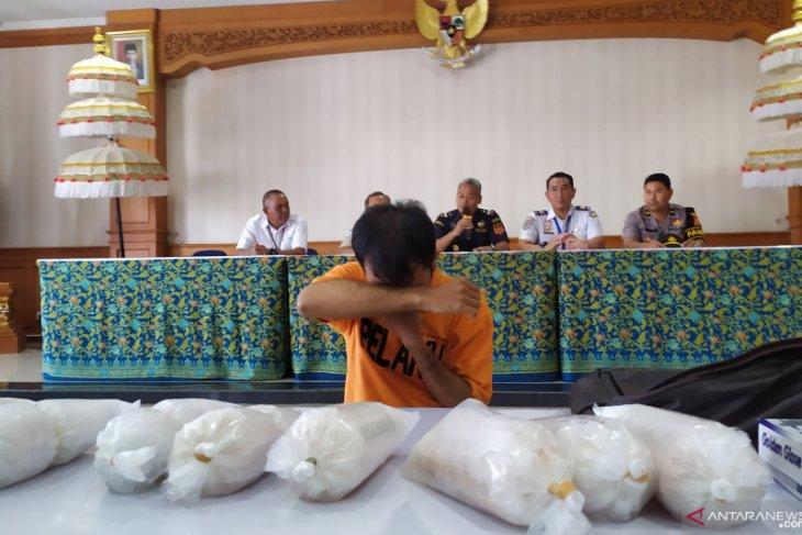 Bea Cukai Ngurah Rai tangkap penyelundup 10.008 benih lobster