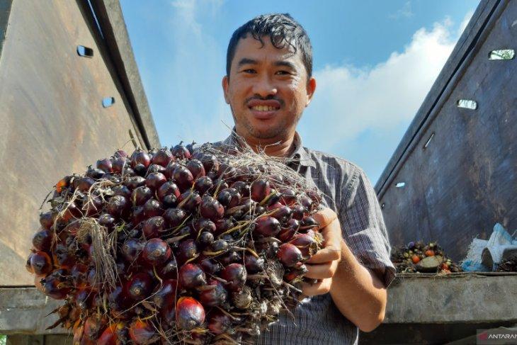 Gapki belum bisa pastikan dampak Corona terhadap penjualan CPO dari Kalbar