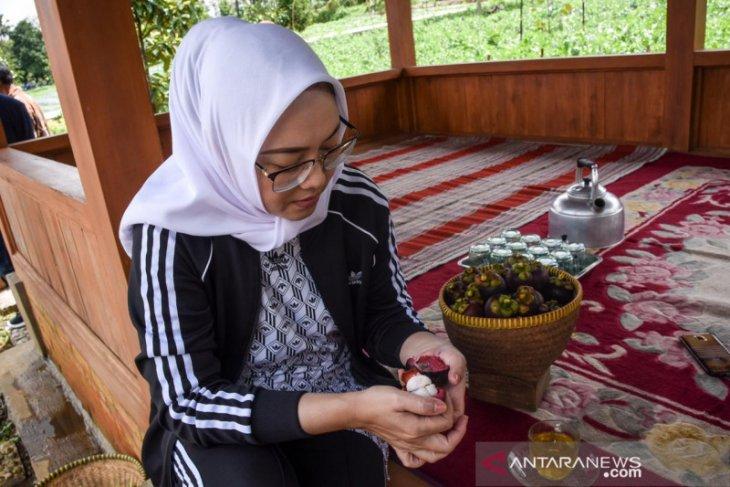 Buah manggis asli Purwakarta didorong miliki daya saing global