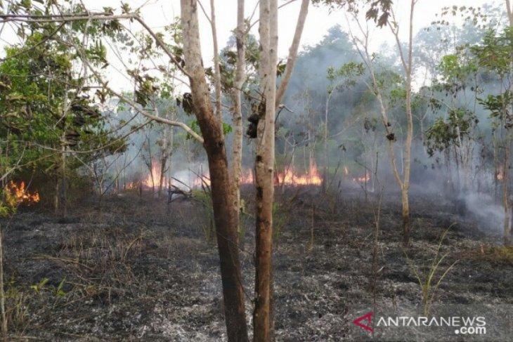 2,5 hektare kebun warga di Gunungsitoli terbakar
