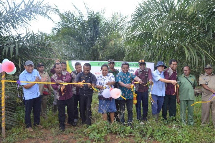 Korindo Gives Papuan Residents their First Plasma Plantation