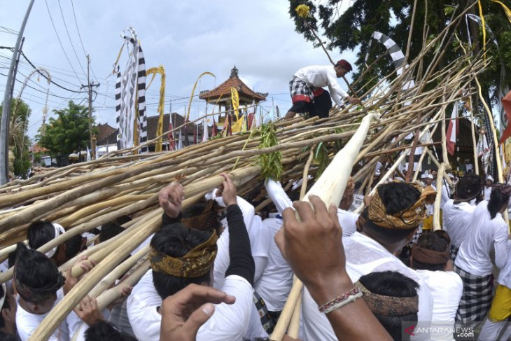 """Thousands of residents participate in """"Mekotek"""" Tradition in Badung"""