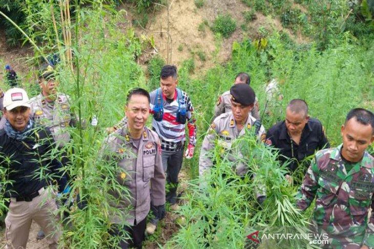 Delapan hektare ladang ganja di Aceh Utara dimusnahkan