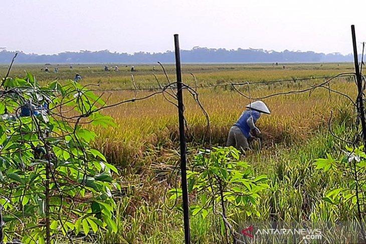 Komisi IV DPR ingatkan penanganan COVID-19 perlu pikirkan sektor pertanian