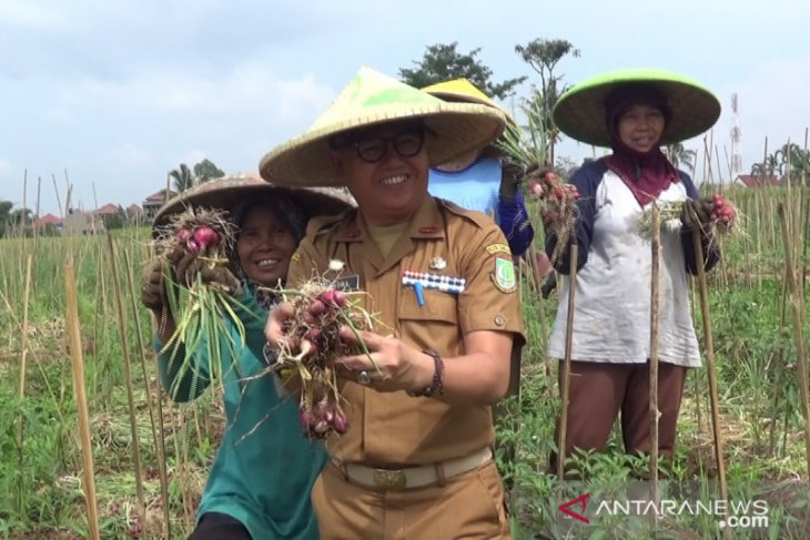Bawang merah dicanangkan jadi komoditas unggulan pertanian Kota Sukabumi