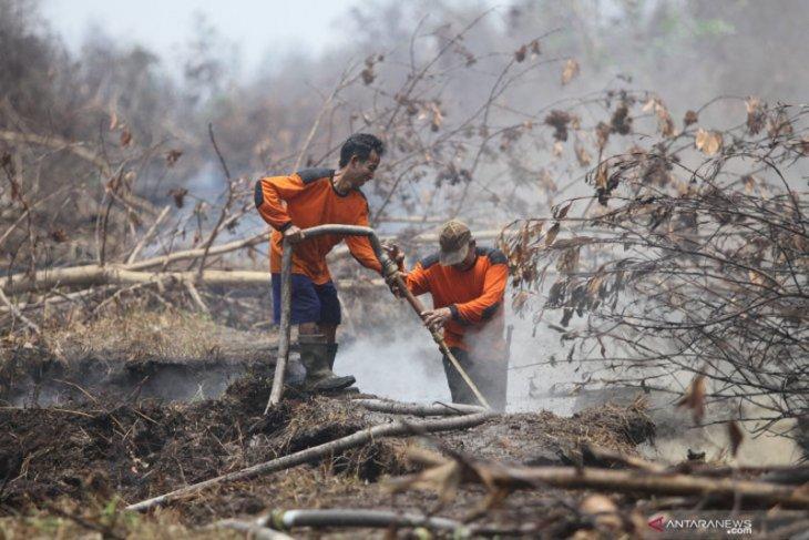 Presiden minta penataan lahan gambut secara konsisten untuk  cegah kebakaran
