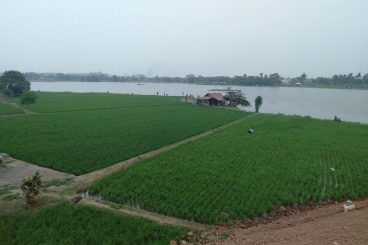 Sawah terendam banjir, Pemkab Karawang ajukan permohonan bantuan ke Kementan