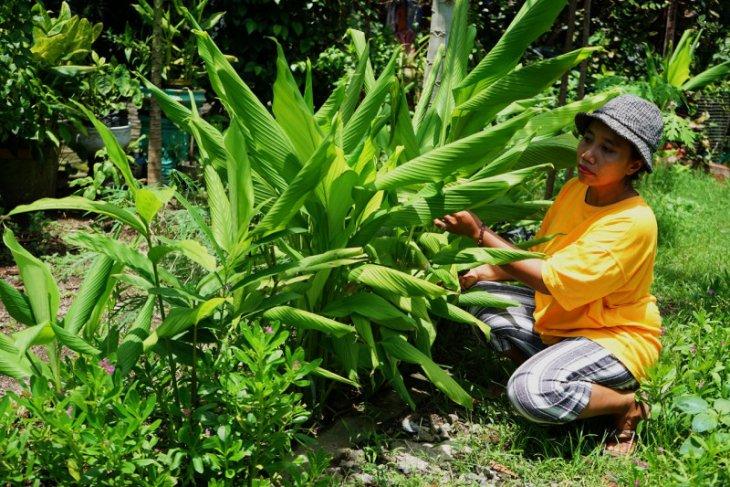 DKPP Surabaya beri bantuan bibit tanaman toga kepada warga