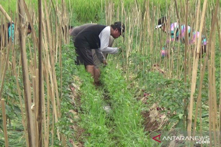 Pemkab Sukabumi pertahankan 55 ribu hektare dari alih fungsi lahan pertanian