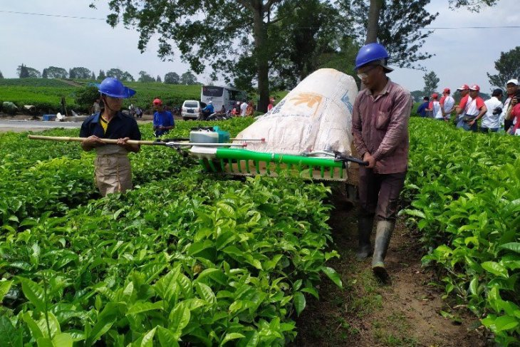 Tea lovers hold Nusantara Tea Festival in Simalungun