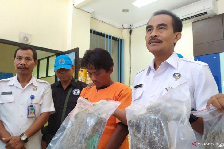 BNNP Bali tangkap kurir ganja jaringan Medan-Bali