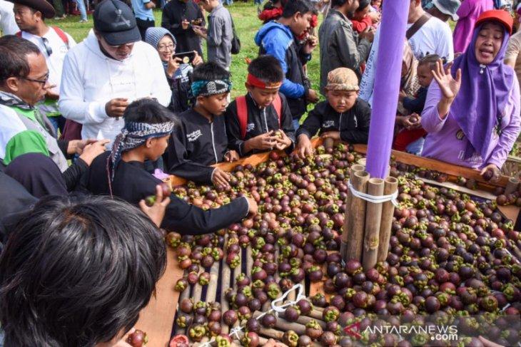 Pengunjung berebut manggis gratis pada Festival Manggis Purwakarta
