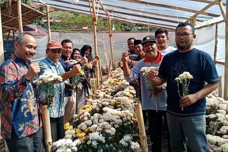 Distan Aceh Tamiang pelajari pengembangan Bunga Krisan