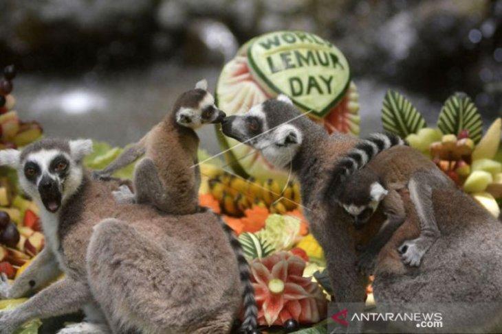 Bali Zoo tutup sementara antisipasi COVID-19