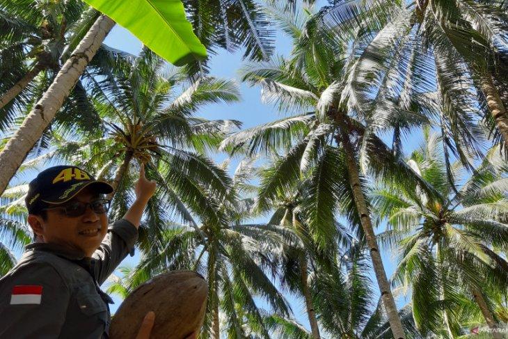 Kabupaten Kubu Raya dorong perusahaan perkebunan sasar pasar ekspor